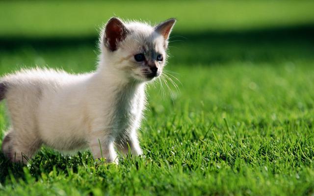 Кошки и котята - фото 0301