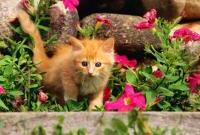 Кошки и котята - фото 0302