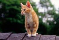 Кошки и котята - фото 0303