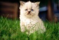 Кошки и котята - фото 0305