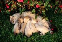 Кошки и котята - фото 0307