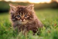 Кошки и котята - фото 0308