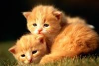 Кошки и котята - фото 0309
