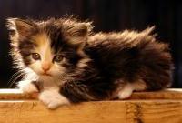 Кошки и котята - фото 0313