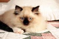 Кошки и котята - фото 0316