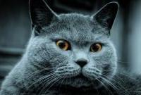 Кошки и котята - фото 0318