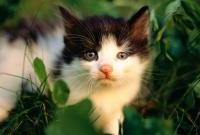Кошки и котята - фото 0319