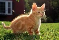 Кошки и котята - фото 0320