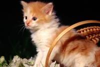 Кошки и котята - фото 0321