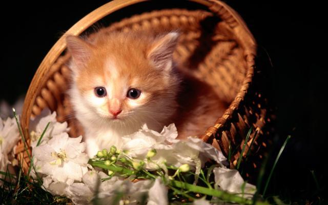Кошки и котята - фото 0322