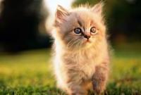 Кошки и котята - фото 0323