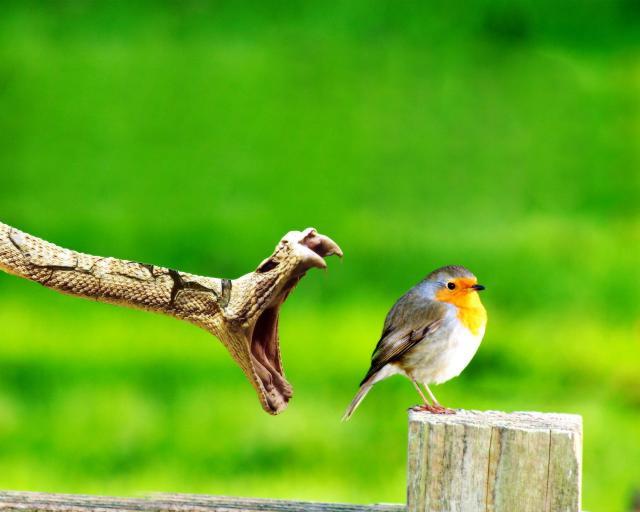 Птицы - фото 0325
