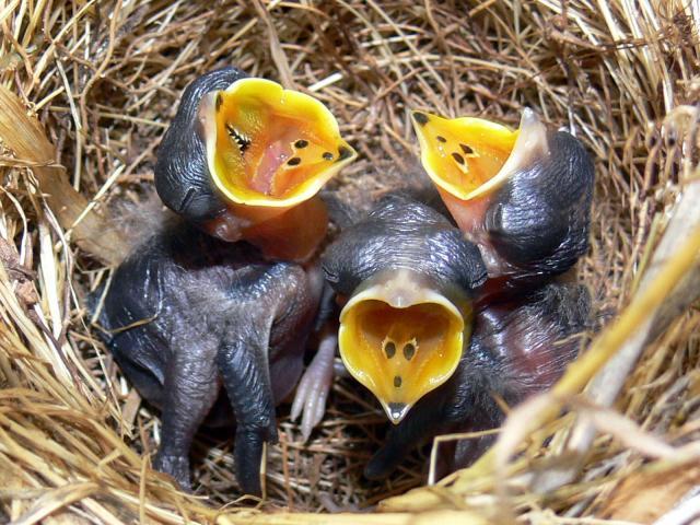Птицы - фото 0326