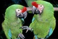 Птицы - фото 0328