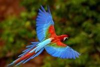 Птицы - фото 0330