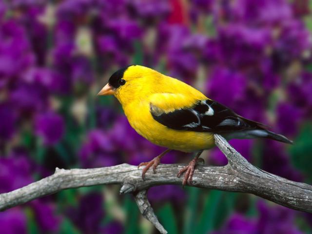 Птицы - фото 0331