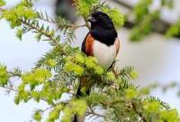 Птицы - фото 0333