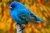Птицы - фото 0337