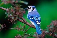 Птицы - фото 0338