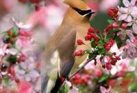Птицы - фото 0340