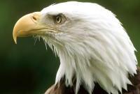 Птицы - фото 0346