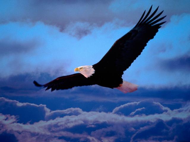 Птицы - фото 0348