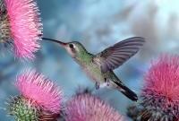 Птицы - фото 0349