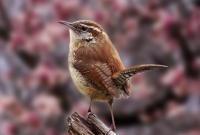 Птицы - фото 0350