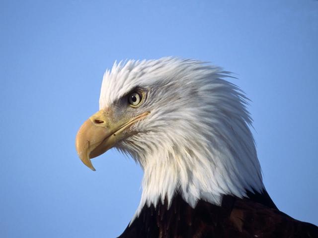 Птицы - фото 0352