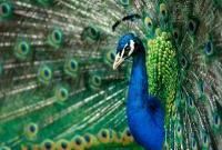 Птицы - фото 0365