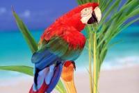 Птицы - фото 0374
