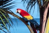 Птицы - фото 0375