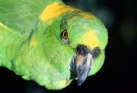 Птицы - фото 0377