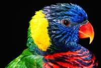 Птицы - фото 0378