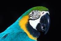 Птицы - фото 0380