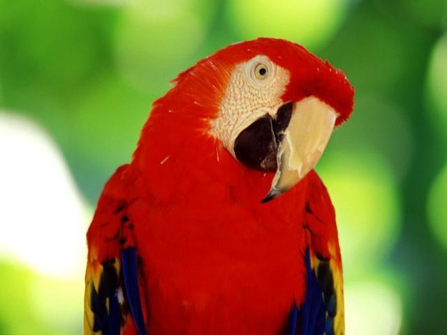 Птицы - фото 0381
