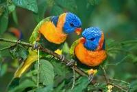 Птицы - фото 0382