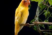 Птицы - фото 0383
