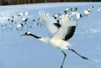 Птицы - фото 0389