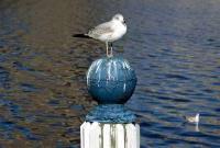 Птицы - фото 0390